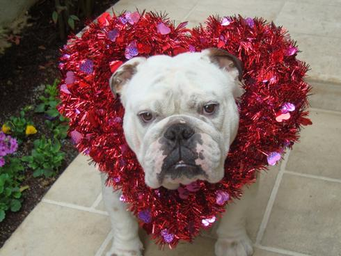 Cute puppies in movies the moviemixology valentine s - Valentine s day animal pics ...